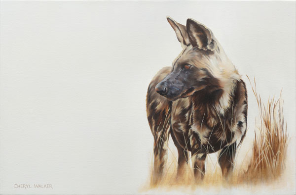 Rare Solitude - Wild dogs live in packs.  This photograph was a rare occurence.  Beautiful to paint.