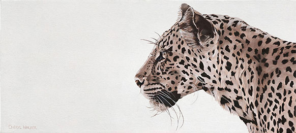 Leopard Watching - This was painted from photographs taken of a leopard in Mashatu, Botswana.   . . Further is a painting of the same leopard stalking its prey . . .